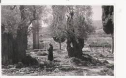 GARDEN OF GETHSEMANE  INTERIOR (CARTE PHOTO) - Israele