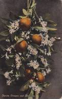Florida Oranges And Blossoms,  Florida,  00-10s - Autres