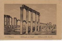 PALMYRA COLUMNAS OF THE TEMPLE  SIRIA  OHL - Syrië