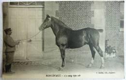 CPA HOMME QUI TIENT UN CHEVAL EN LONGE RONCEVAUX 1/2 Sang Type Cob - P Boiffin Argentan - Horses