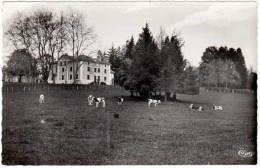 Sainte Croix Le Fouilloux - Le Château ( Vaches ) - France