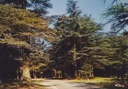 Cp , 84 , BONNIEUX , Forêt Des Cèdres - Bonnieux