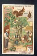 Chromo LIEBIG Récolte De Noix En Bosnie - écureuil - Liebig