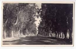 AMERICA URUGUAY CARRASCO AVENUE OLD POSTCARD 1950. - Uruguay