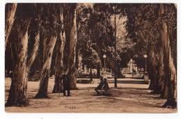 AMERICA URUGUAY MONTEVIDEO GRASSLAND OLD POSTCARD - Uruguay