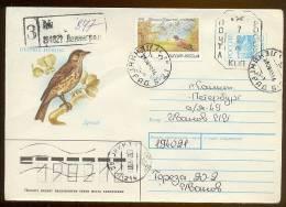 MAIL Used Cover Stationery USSR RUSSIA Provisory Petersburg Leningrad Songbird Thrush - 1992-.... Föderation