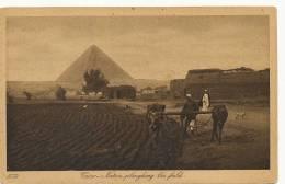 Cairo Native Ploughing The Field Near Pyramids 1059 Lehnert Landrock Labour - Le Caire