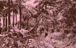 Cameroun :Paysage Africain - Timbres Cameroun - Cameroun