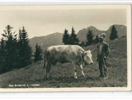 Les Sciernes D´Albeuve. Alpage, Armailli Et Vache, Gros Plan - FR Fribourg