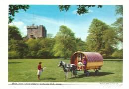 Cp, Animaux, Cheval, Blarney Castle (Ireland), Voyagée - Pferde