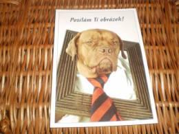 Hund Dog  Bordeaux Dogge Welpen Postkarte - Dogs