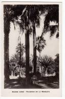 AMERICA ARGENTINA BUENOS AIRES PALM TREES IN RECOLETA OLD POSTCARD - Argentina