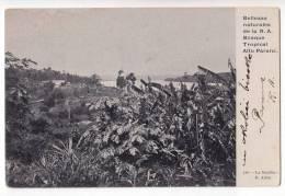 AMERICA ARGENTINA CORDOBA NATURAL BEAUTIES OF R.A. RAINFOREST HIGH PARANE OLD POSTCARD - Argentina