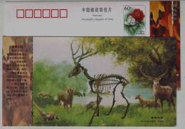 Fossil Of Extinction Pere David´s Deer,golden Pheasant,China 2000 New Taizhou Landscape Advertising Pre-stamped Card - Fossili