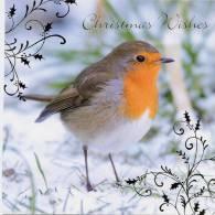 Rouge Gorge Carte De Noël Christmast European Robin Rotkehlchen - Birds