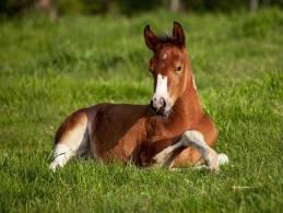 Stickers - 16 Horses - Otros