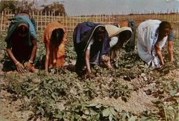 CPSM Bangladesh-Kitchen Gardening   L1163 - Bangladesh