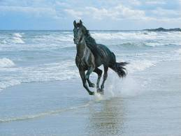 Calendar Pocket 2013 - Horses (collection Of 16 Differents) - Tamaño Grande : 2001-...
