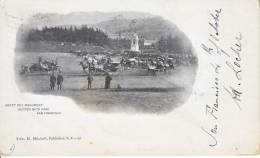 SAN  FRANCISCO,  GOLDEN GATE PARK   HORSE  And  BUGGY 1901 To France - San Francisco
