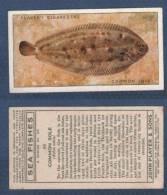 CHROMO PLAYER´S CIGARETTES - SEA FISHES - COMMON SOLE - SOLE COMMUNE - Player's