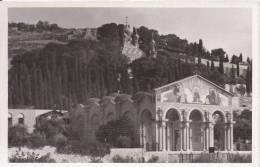 GARDEN AND BASILICA OF GETHSEMANE (CARTE PHOTO) - Israele