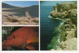 EGYPTE -EGYPT Multi Vues Coral Grouper Cephalopolis Miniata, Ras Mohamed Sand Dunes At Sinai*PRIX FIXE - Egypt