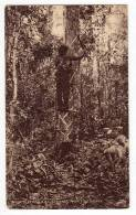 EUROPE UNITED KINGDOM BRITISH COLONY BRITISH GUIANA BLEEDING A BALATA TREE OLD POSTCARD 1947. - Postcards
