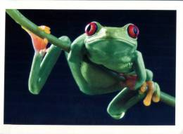 (412) Frog  - Grenouille - Ra - Rana - Disneyland