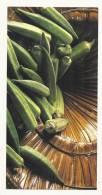Cp, Légumes, Gombos - Photographe : J.P. Dieterlen - Frais De Port : € 1.55 - Fleurs, Plantes & Arbres