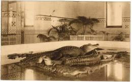 Antwerpen, Anvers, Dierentuin, Jardin Zoologique, Kruipdierenhuis, Bekken Der Krokodillen (pk6566) - Antwerpen