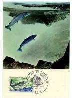 France / Maximum Cards / Animals / Fish - Cartoline Maximum