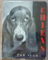 Chiens - Animaux