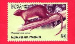 CUBA - USATO - 2007 - Fauna Protetta - Mesocapromys Nanus -  Dwarf Hutia - 30 - Cuba