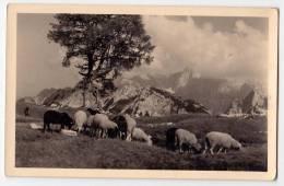 EUROPE SLOVENIA SCENE FROM THE SLEME SKRLATICA POSTCARD - Slovenia