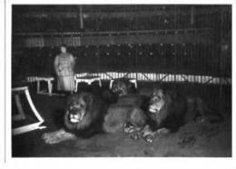 Zirkus Circus Cirque Löwe Lion Dompteur Tilly Bebe Sw - Cirque