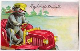 Teddy Bear Driving A Car - Bears