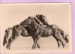 CPM 10*15/M444/RENE SINTENIS JUNGE SHETLANDPONYS REMBRANDT VERLAG BERLIN ZEHLENDORF - Sculptures