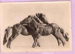 CPM 10*15/M445/RENE SINTENIS JUNGE SHETLANDPONYS REMBRANDT VERLAG BERLIN ZEHLENDORF - Sculptures