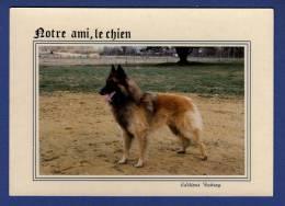 CHIENS Notre Ami, Le Chien - Chiens