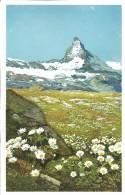Chrysanthemum Alpinum, Alpen- Wucherblume, Gorner Grat Bei Zermatt: Serie 578 N° 1474 - Fleurs, Plantes & Arbres