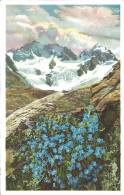 Eritrichium Nanum, Himmelsherold=Zwergvergissmeinnicht, Engadin Berninagruppe: Serie 579 N° 1483 - Fleurs, Plantes & Arbres