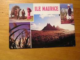 Ile Maurice La Cane A Sucre Principale Ressource De L'ile - Mauricio