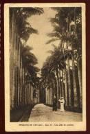 Cpa Sri Lanka Ceylon Une Allée De Palmiers    SAB26 - Sri Lanka (Ceylon)