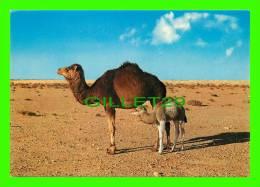 CHAMEAUX, CAMELS, DROMADAIRES - LYBIA, CAMEL WITH HER KID - ÉCRITE - Cartes Postales