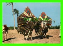 CHAMEAUX, CAMELS, DROMADAIRES -  SUD ALGÉRIEN, HAREM EN DÉPLACEMENT - - Autres