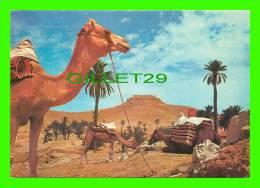 CHAMEAUX, CAMELS, DROMADAIRES -  SUD TUNISIEN, UNE CARAVANE AU REPOS - - Autres