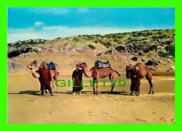 CHAMEAUX, CAMELS, DROMADAIRES - MAROC. LES CHAMELIERS - KRUGER - - Autres