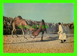 CHAMEAUX, CAMELS, DROMADAIRES -  SUD TUNISIEN, COMBAT DE CHAMEAUX - - Cartes Postales
