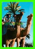 CHAMEAUX, CAMELS, DROMADAIRES -  SCÈNE DU DÉSERT - - Cartes Postales