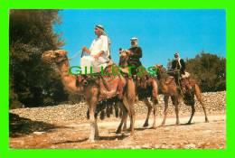 CHAMEAUX, CAMELS, DROMADAIRES - BEDUINS ON A CAMEL - - Cartes Postales